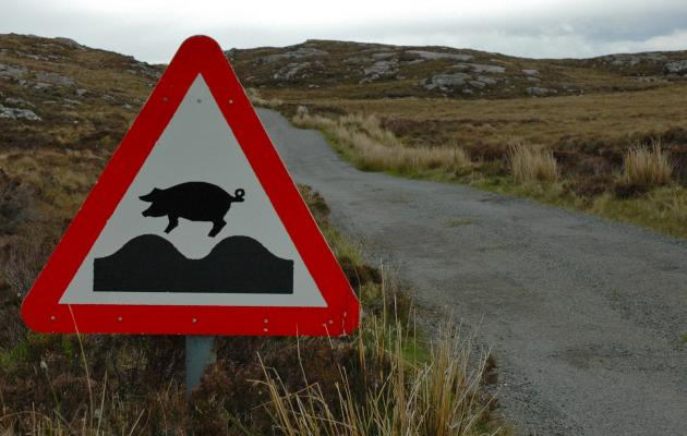 Road sign with pig